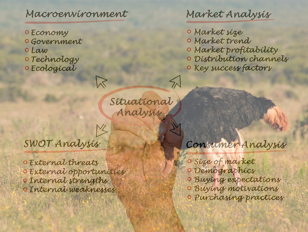An ostrich with its head in the ground as a background to a person with a plan detailed in charts.