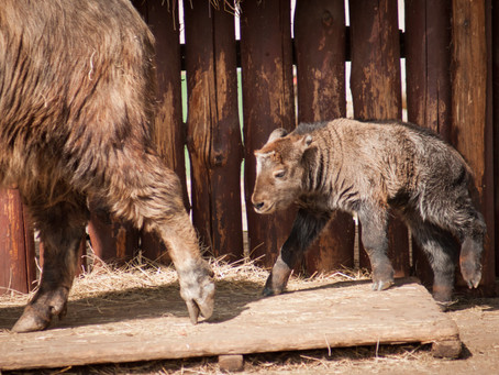 All Micro Everything