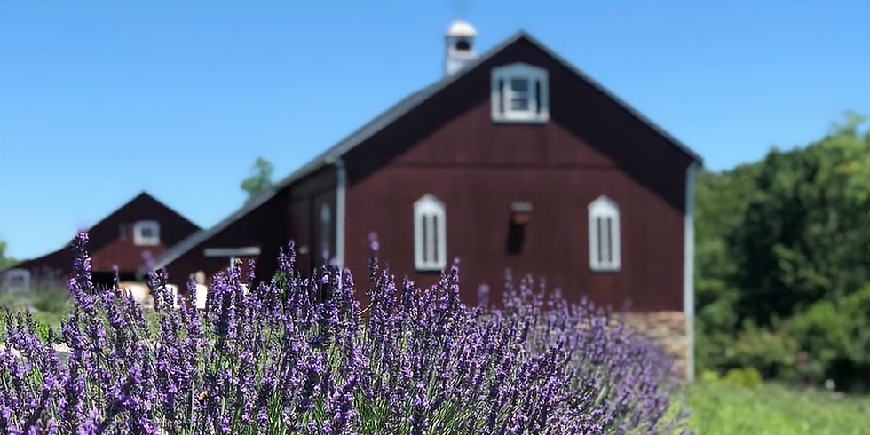 Lavender Festival at Star Bright Farm