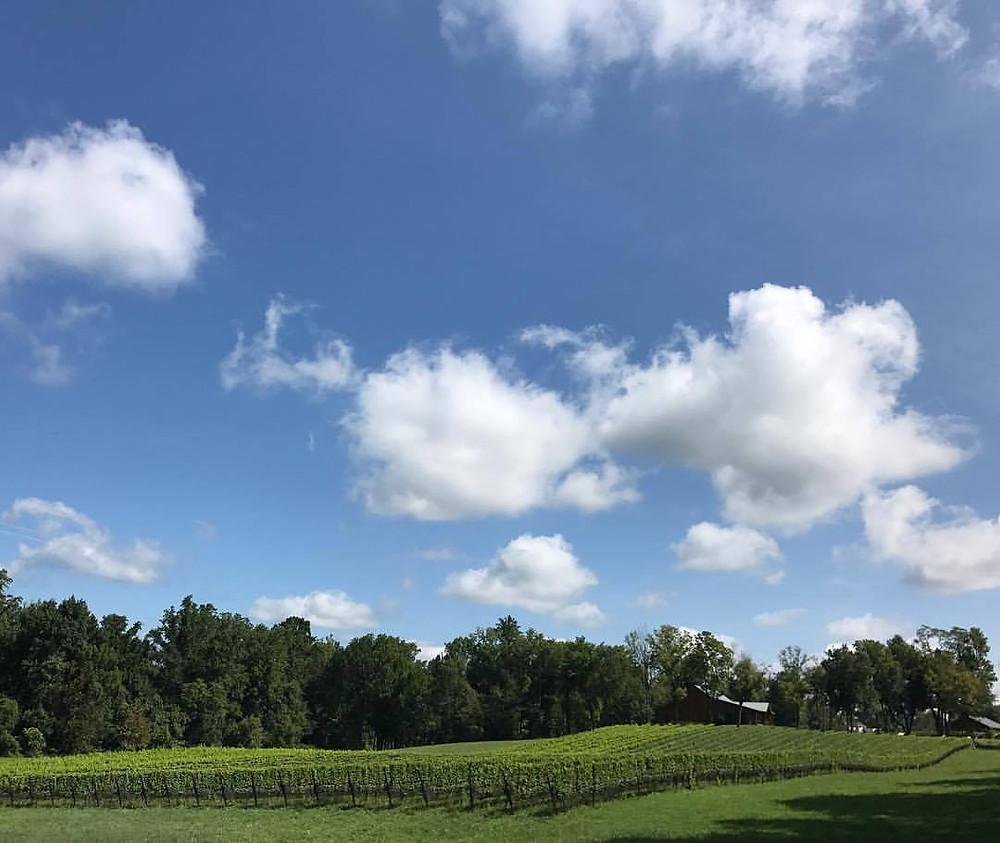 The Vineyards at Dodon