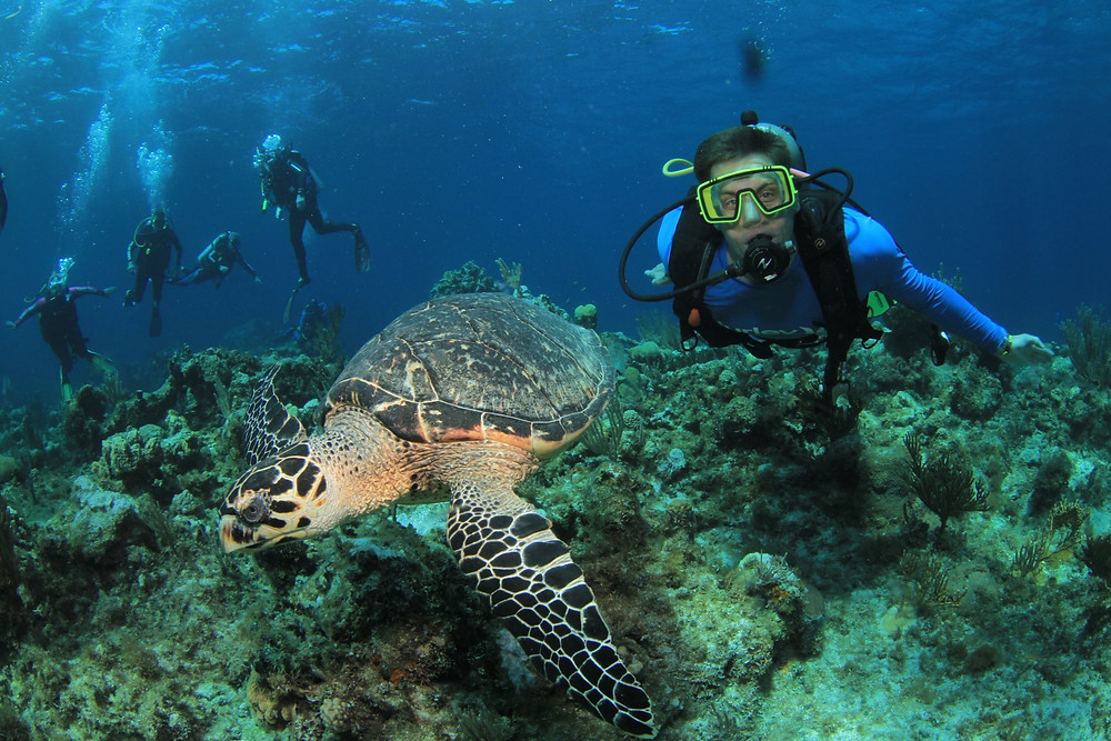 Group scuba diving in the Bahamas and encountering a sea turtle.