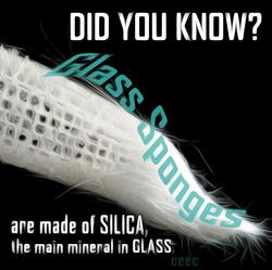 glass sponge