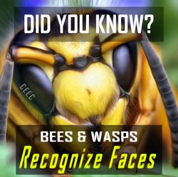 insect facial rec
