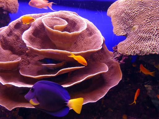 Eilat: Korallen, Fische & Co