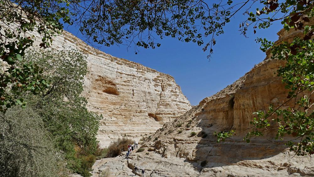 Ein Avdat (auch En Avdat genannt) im Negev, Israel