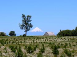 Volcan d'Osorno (Chile)