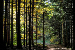 Forest (Espezel, France)