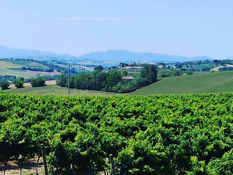 Marche Wine