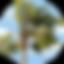 Caifornian Logo