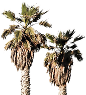 Palm Tree header decoration