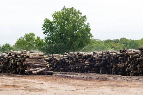 Log Yard w/ Sprinklers