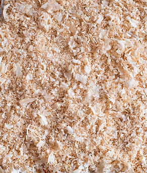 Dry wood shavings background. Wood dust
