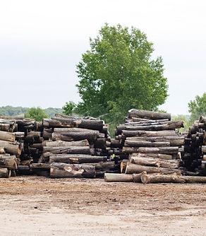 Log Yard.jpg