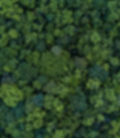 Aerial top view forest tree, Rainforest