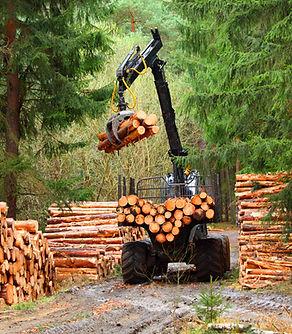 Lumberjack with modern harvester working