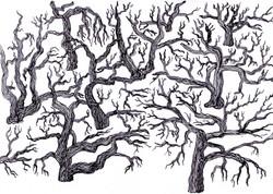 Elfajzott erdő