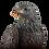 Thumbnail: US-Weißkopfseeadler auf Ast