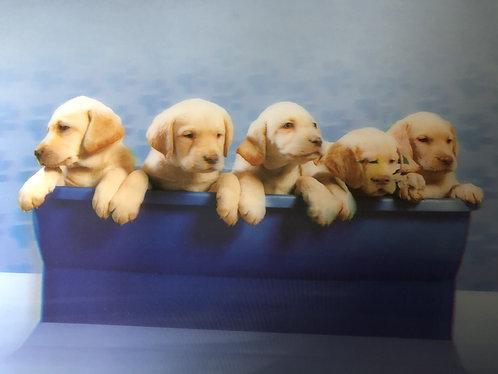 3D Platz-Set Labradorwelpen