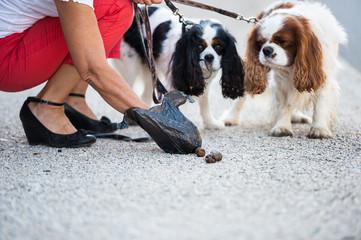 Attention à son chien au Mans Risque d'amende de 68€