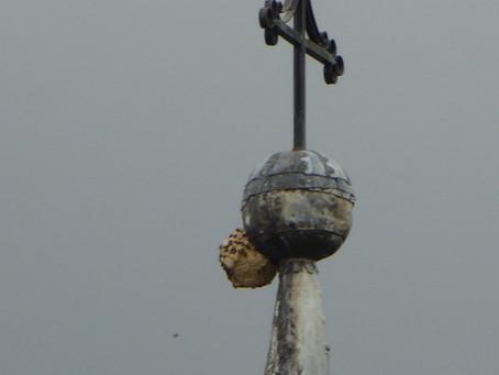 Le frelon asiatique attaque notre clocher