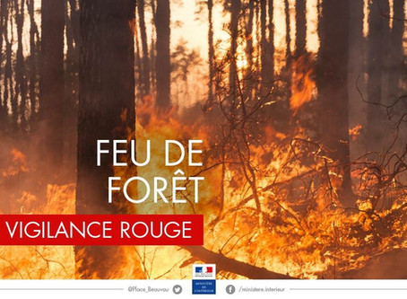 Attention feude forêt