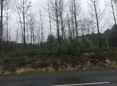 Feu de forêt route de Brette jeudi