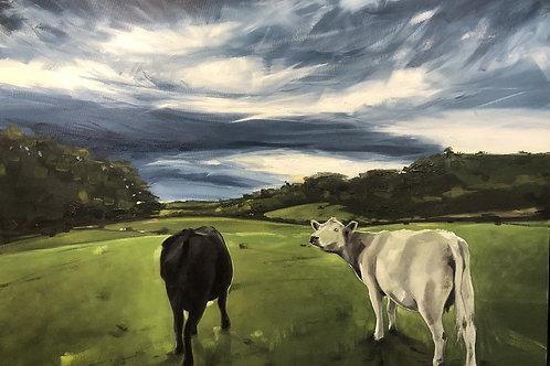 cows waiting for the rain