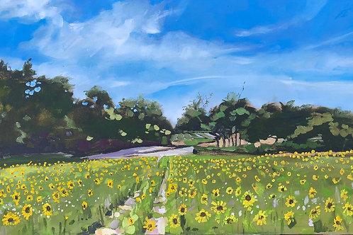 In the sunflower field