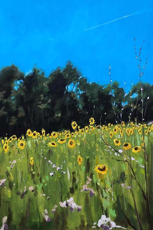 'Sunflower Field' on Flexi phone case