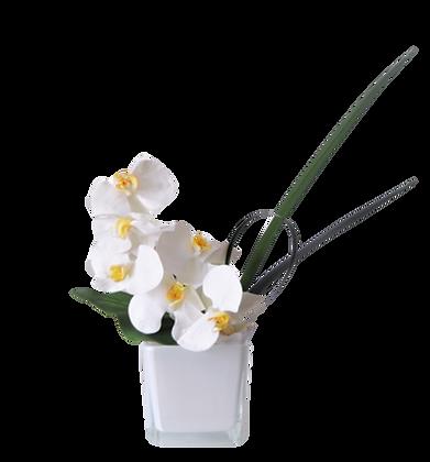 Bouquet PHALAENOPSIS S WH Vase Verre Blanc
