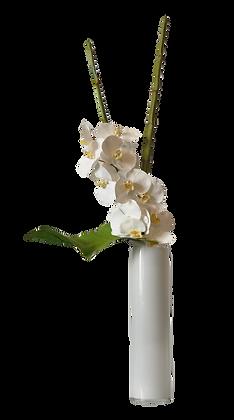 Bouquet L PHALAENOPSIS WH Vase Verre Blanc