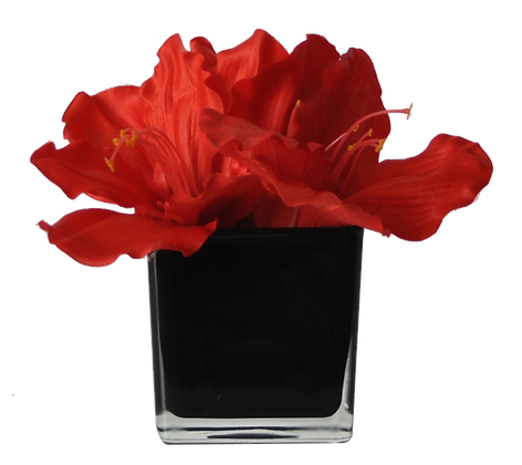 Centre de Table S AMARYLLIS ROUGE CUBE BK