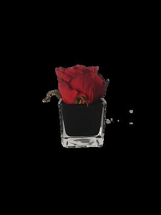 Soliflor XS 1 ROSE ROUGE CUBE BK