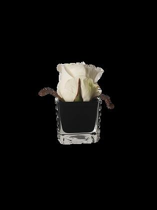 Soliflor XS 1 ROSE BLANC CUBE BK