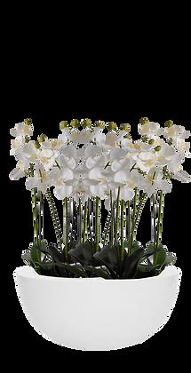 Coupe Orchidées XL WH Fibre laquée Blanc