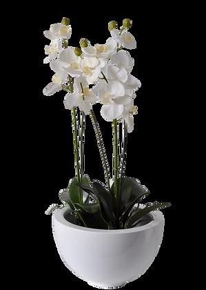 Coupe Orchidées M WH Fibre laquée Blanc