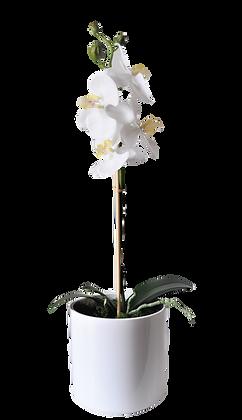 Pot 1 Orchidées S WH Fibre laquée Blanc