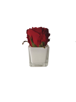 Soliflor XS 1 ROSE ROUGE CUBE WH