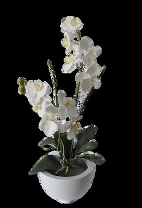 Coupe Orchidées S WH Fibre laquée Blanc