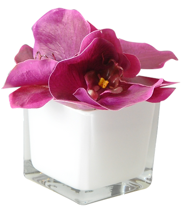 Soliflor XS ORCHIDEES PRUNE CUBE WH