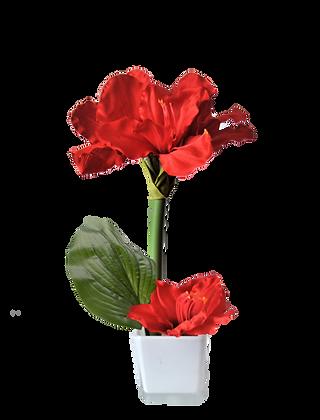 Bouquet AMARYLLIS S RD Vase Céramique Blanc