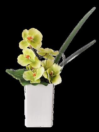Bouquet PHALAENOPSIS M GR Vase céramique Blanc