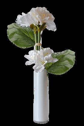 Bouquet AMARYLLIS L WH Vase verre Blanc
