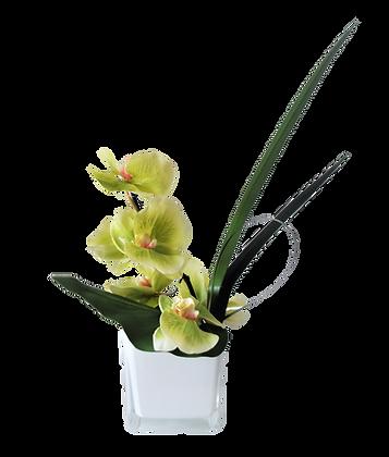 Bouquet PHALAENOPSIS S GR Vase Verre Blanc