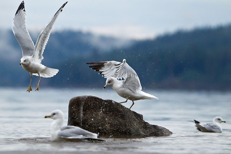 Seagull Rock in Coeur d'Alene Idaho