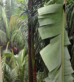 Palms and Banana