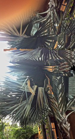 Abstract Palm 11