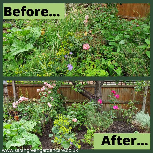 Garden tidy up