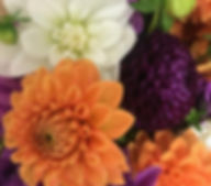 Dahlia Flower Pix .jpeg
