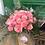Thumbnail: 24 Roses Aqua Packed Bouquet